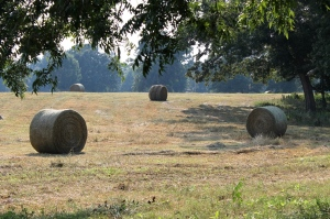 Hay rolls in the haze