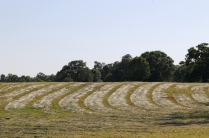 freshly cut hay fields
